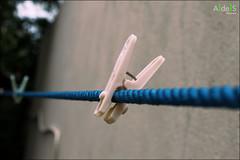 """Peggy"" (Ashan de Silva) Tags: pink blue wall focus object line explore clothesline 1855mm canondslr peg apature canoneos500d canon1855mmis ashandesilva canonrebelt1i"