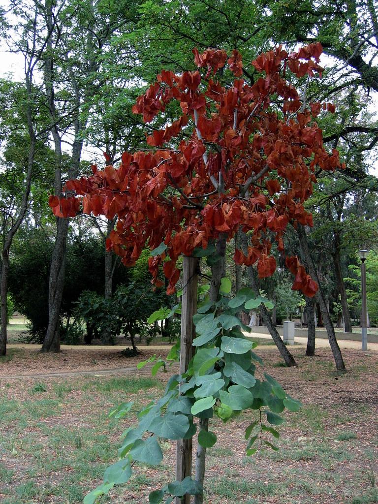 Quinta dos Lilases (Agosto2009)