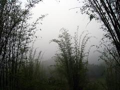 Sapa: La niebla (jorgecab) Tags: paisajes verde vietnam nublado niebla sapa
