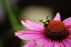 sucking pollen