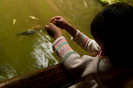 Chitra Aiyer - Feeding fish, Vythiri resorts