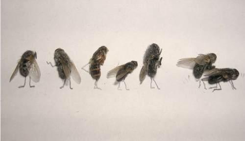 dead-flies-art-13