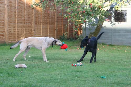 Tealeaf & Ducu destroy Murphy's toys.