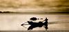 ඔරුවක පාවෙන රෑ ඝන අන්දුරෙ... (Madhawa) Tags: life nature asia sl srilanka ceylon wilderness lk preservation untamed animalswildlife livingplanet krishlikesit wildlilfephotography wwwuntamedsrilankacom madhawakarunaratne 360°imagesofsrilanka
