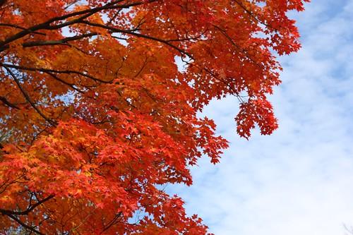 fall5