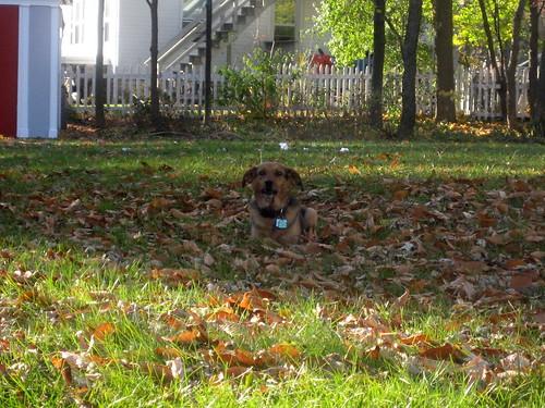 Camo Dog Looks Like Leaves