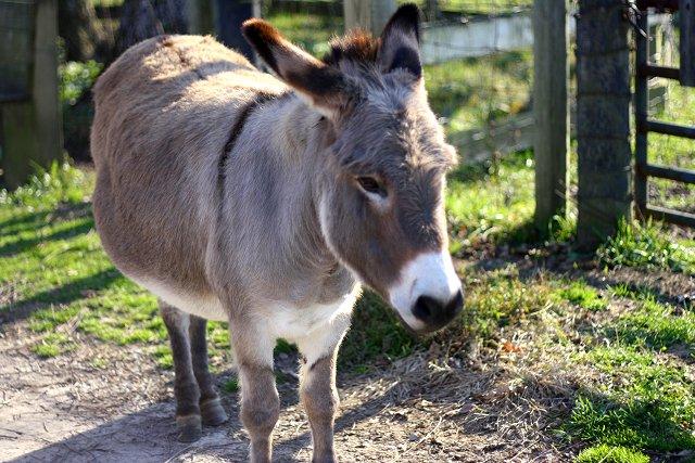 bye bye donkey