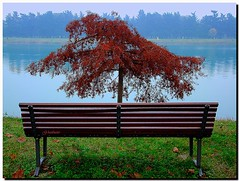 Autunno all'Idroscalo di Milano (G.hostbuster (Gigi)) Tags: autumn lake milan tree green water rain fog be