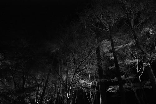 香嵐渓-Kourankei
