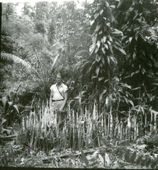 Hugo curran with pneumatophores (aerial roots) of an unidentified tree near Masamba