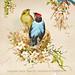 Blue-backed Mannikin Bird