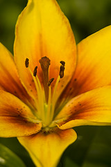 Nature's Allure (Alf's Work) Tags: orange flower macro yellow canon 350d lily