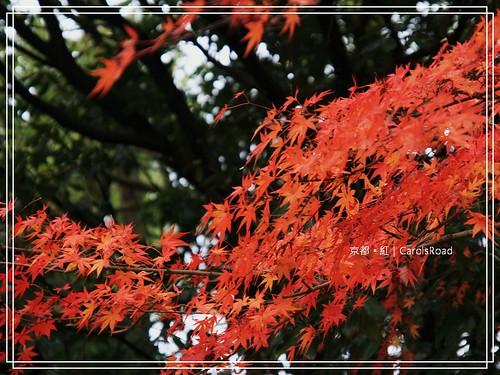 2009-12-11 京都 099 R