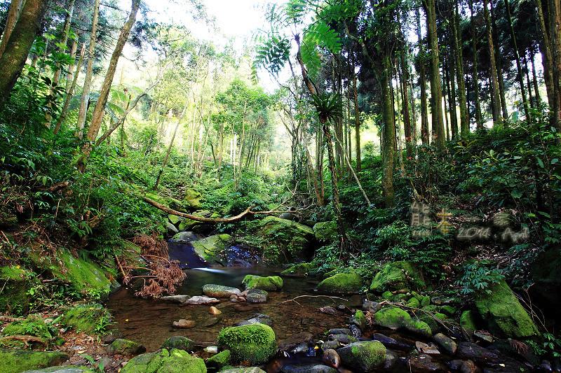 熊空休閒農場茶園森林浴芬多精
