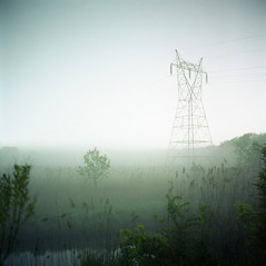 (patrickjoust) Tags: county light usa color tree 120 6x6 tlr film fog night analog america river reeds d