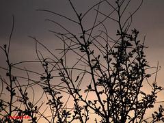 دلتنگیهایم (no0shin) Tags: sky alone آسمان تنهایی دلتنگی گره