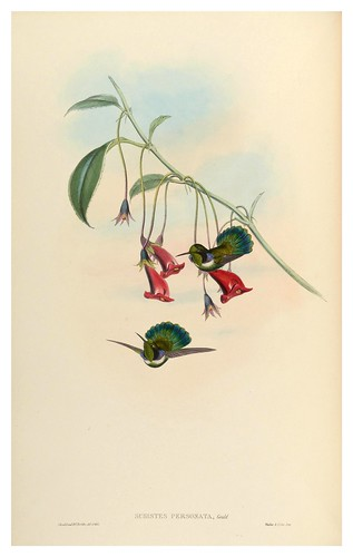 013-An introduction to the Trochilidae or family of humming-birds- Vol 4- 1861-John Gould