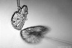 Macro Monday - Heart (roseysnapper) Tags: heliconfocus macromonday niksoftware nikkor105mmf28 nikond810 silverefexpro20 stvalentine valentinesday closeup focusstack whitebackground heart lightroom macro photoshop backlit jewellry necklace reflection shadow silver blackandwhite monochrome bw