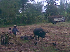 Oct 29 08028 (jimdmil) Tags: composting in maugbi