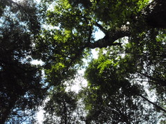 Trees (tonuzi) Tags: trees sky poconos lpsky
