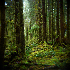 The memory of forests (Zeb Andrews) Tags: trees fern green film nature forest square landscape outdoors washington holga rainforest gorgeous olympicpeninsula plasticfantastic pacificnorthwest olympicnationalpark mossy bluemooncamera zebandrews zebandrewsphotography nosignofman excepttheroad50metersbehindme pfemerald primevalforestgroups pfmoss