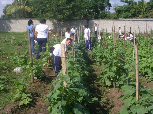 Luis Landa kids working in garden.jpg