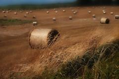 Rollin Zee Hay (RobMcA Photography) Tags: summer scotland country arts farmland fields farms hay robireland