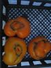 Azoychka Tomatoes (again)