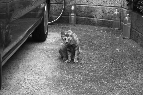Today's Cat@20090809