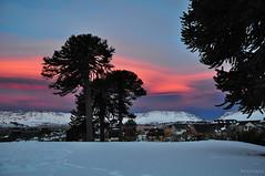 "Atardeder de agosto ~ August sunset (Bogaugon) Tags: winter sunset cloud mountain snow argentina landscape atardecer nieve paisaje paisagem cielo neve invierno araucaria montaña inverno nube neuquén coth caviahue abigfave platinumphoto platinumheartaward ""flickraward"""
