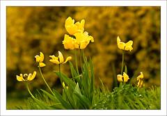 hortensia (Anders Mohlin) Tags: sverige vr gnesta srmland lillasigtuna