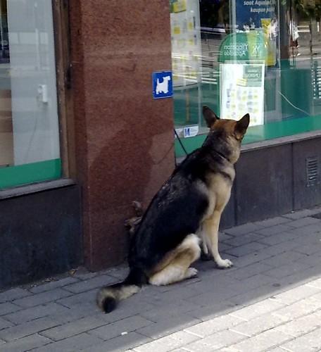 cão estacionado