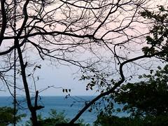 Windy Sunset (Reinalasol) Tags: ocean trees sunset sky beach nature water silhouette skyscape landscape flickr sundown dusk resort chain tropical april vista panama 2009 tropics centralamerica waterscape waterscapes decameron april2009 panama2009 reinalasol