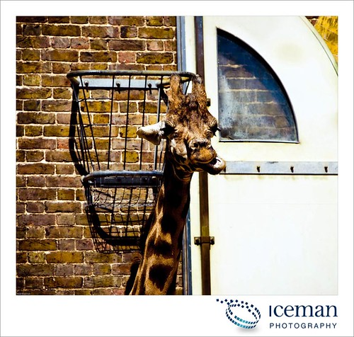 London Zoo 017