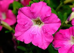 _DSC3093 (pnther60) Tags: backyard roanoke floraandfauna