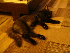 Rafa (Luca Nonato) Tags: black cat blackcat chat noir kitty neko gatto nero chatnoir gattonero