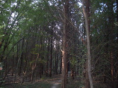 bonham state park woodlands 2