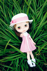 Tall Monkey Grass