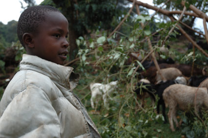 Kakenyas nephew is herding goats--Maasais second important property.