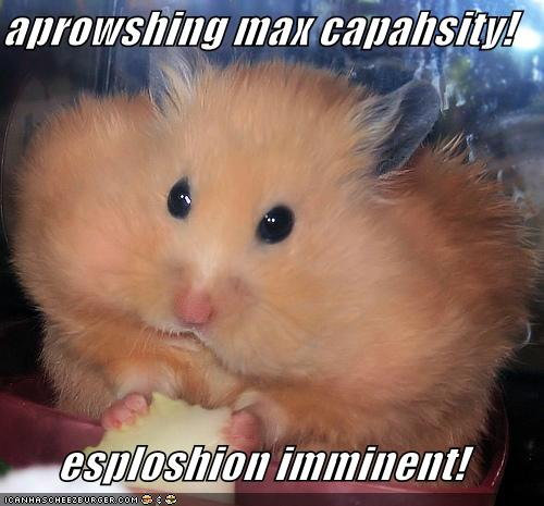 funny-pictures-hamster-eats-cheese
