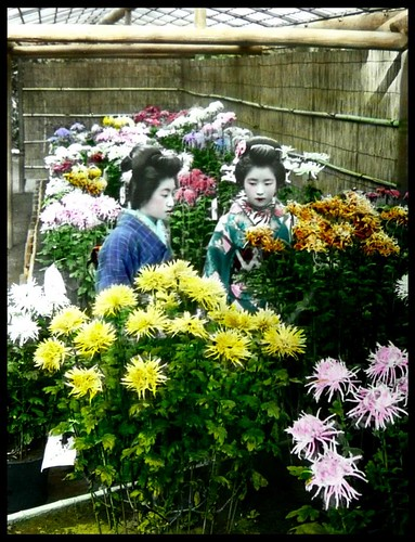 TWO YOUNG GEISHA AT A FLOWER SHOW in OLD YOKOHAMA, JAPAN