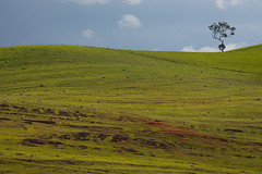 One Tree Hill (Sam Ili) Tags: sky tree green canon sheep hill australia canberra weejasper 450d canon24105mm4 worldnomads2009