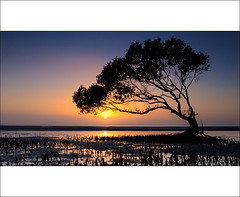 So Much For The After Glow (Matthew Stewart | Photographer) Tags: ocean sea reflection water sunrise australia brisbane mangrove qld queensland ripples mangroves duststorm beachmere alemdagqualityonlyclub