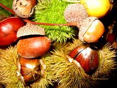 Something for the Squirrel? (abrideu away on Holiday) Tags: autumn canon bej goldstaraward virtualjourney abrideu