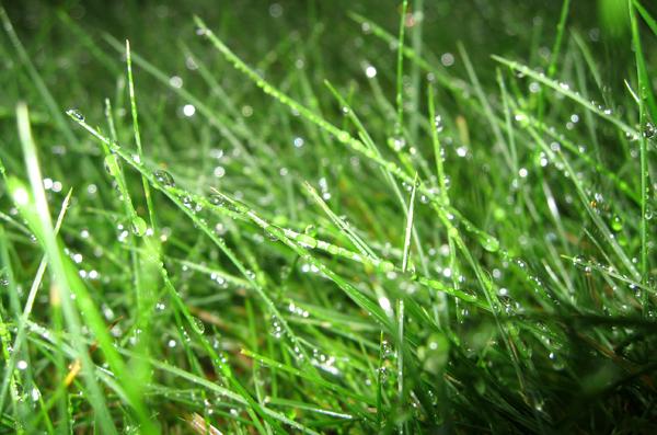 Grass_3078