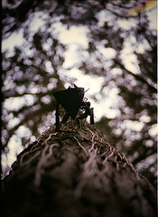 (. : Jonathan Fiamor : .) Tags: leica wedding portrait tree metal cat 35mm san francisco photographer bokeh jonathan voigtlander else ttl everything m6 sfsu f12 aspherical jonathanfiamorsanfranciscowedding portraitandeverythingelsephotographerwwwfiamorcom fiamor wwwfiamorcom