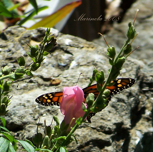 Pretty Pink and Butterfly