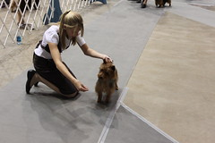 Dog show Rapid City