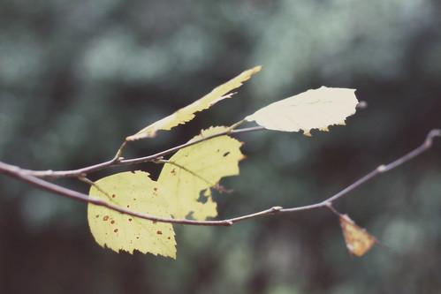 Fall's Bend