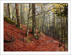 Bosque (Alberto Abizanda) Tags: france olympus lacs zuiko 2009 niebla pyrenees pirineo ibon ayous zd1454mm qcfaj lacdayous e620 albertoaf3